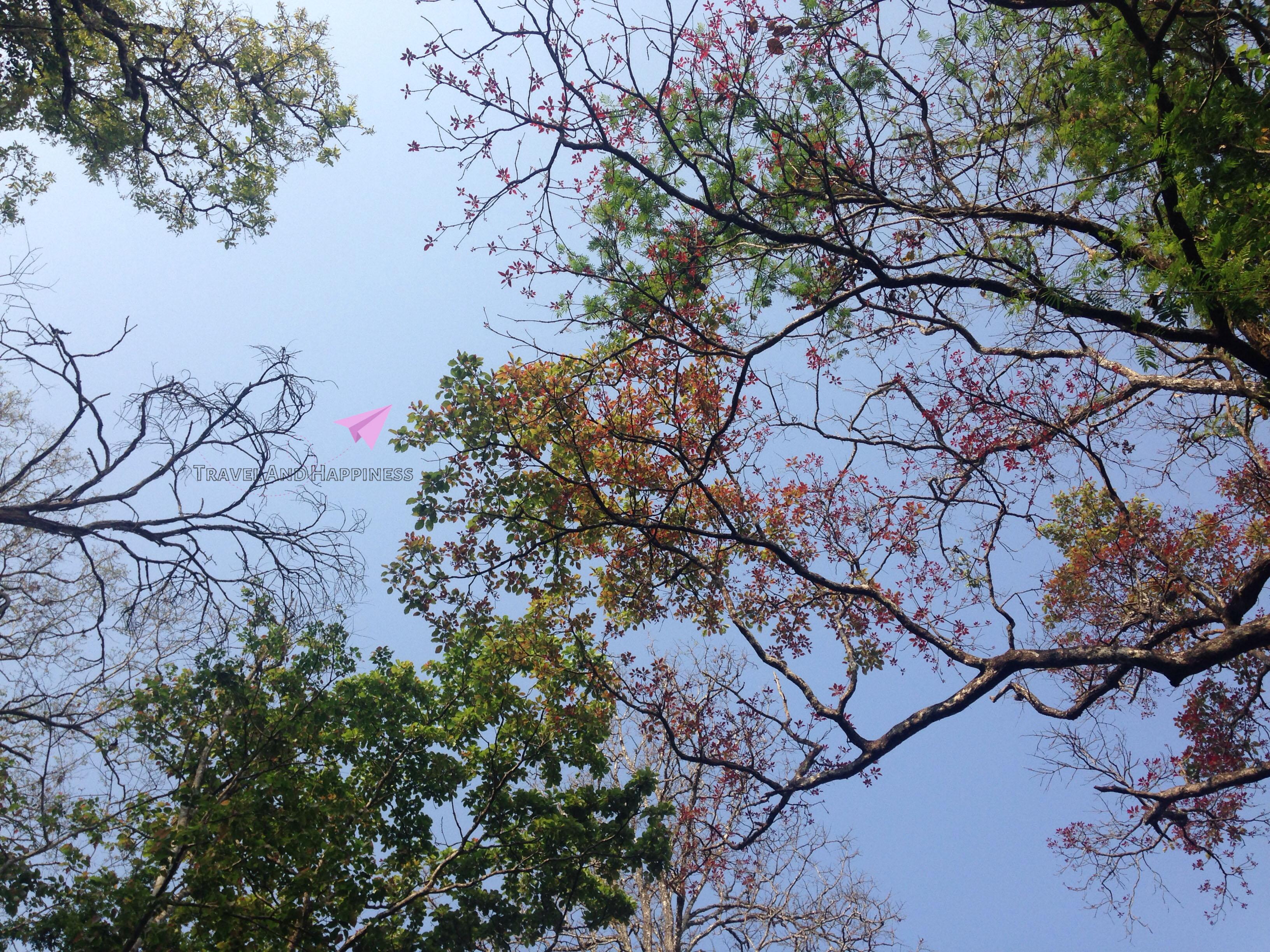 17. Forest sky inside Bhadra Tiger Reserve