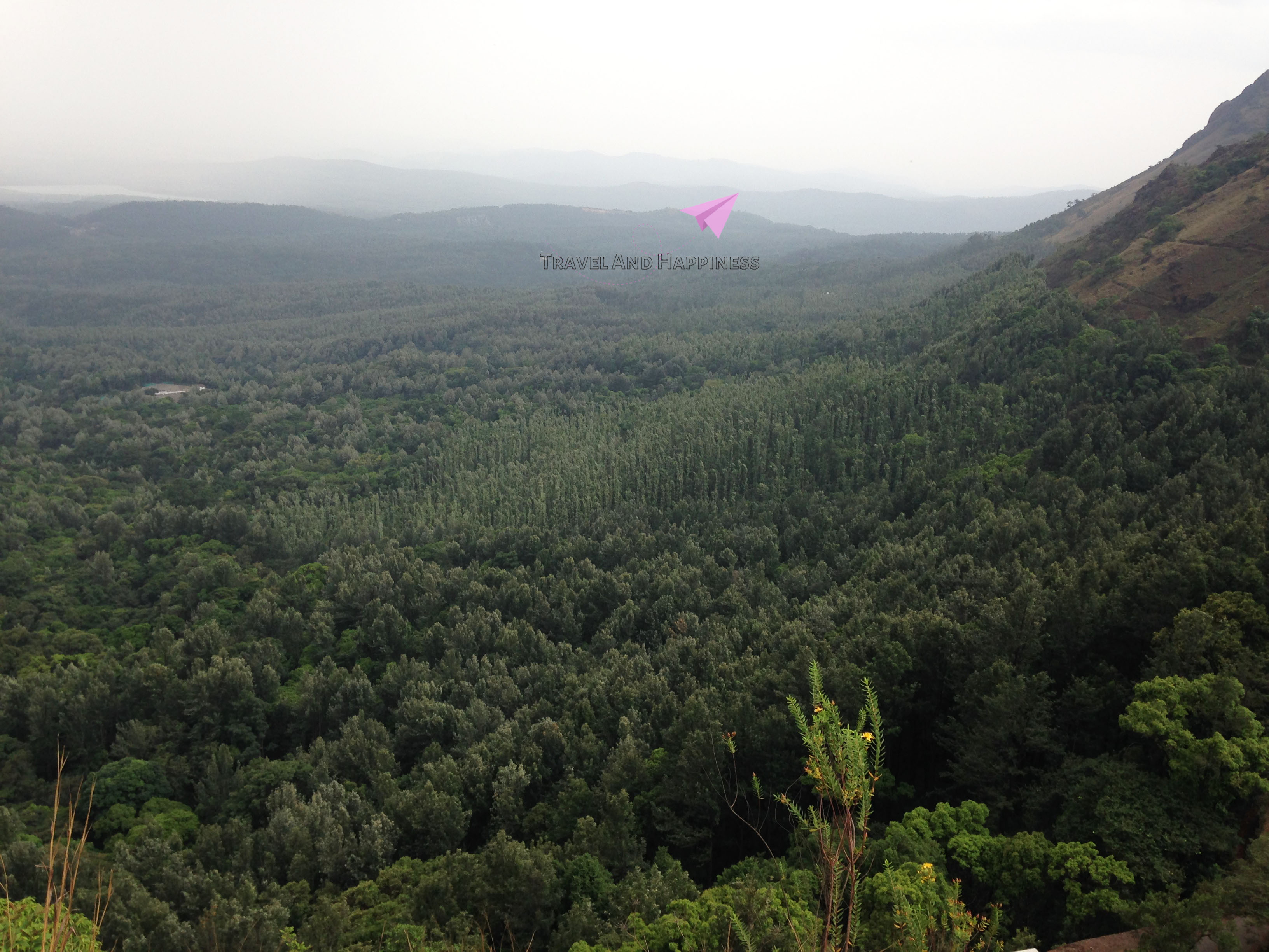 8. Forest expanse western ghats
