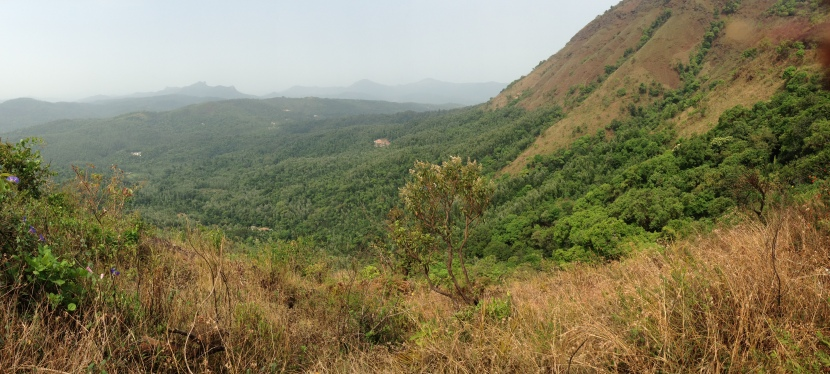 Roaming in the Western Ghats