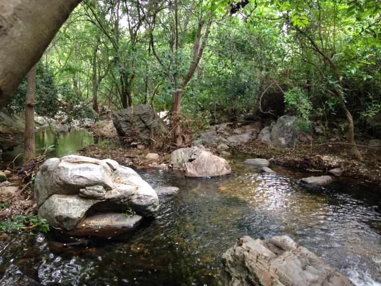 Nagalapuram Forest