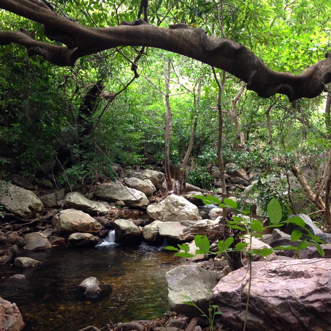 Inside Nagalapuram forest