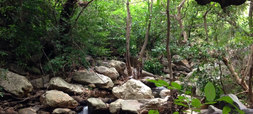 Trek to the Enchanted Nagalapuram Forests