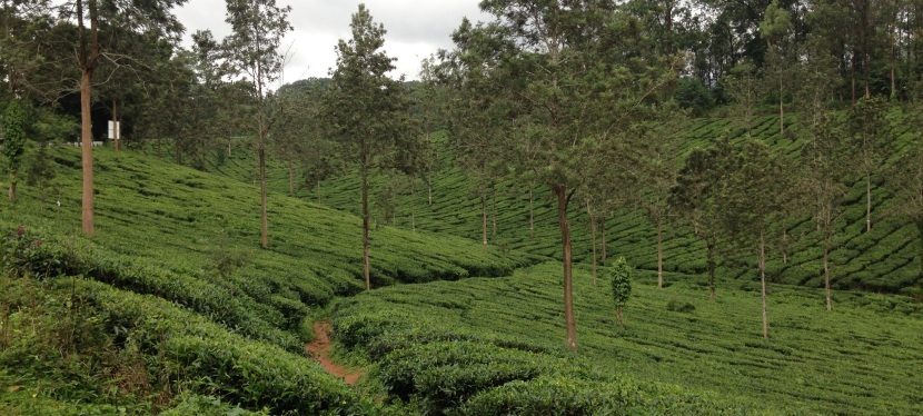 Experiencing the Kerala Monsoons atWayanad