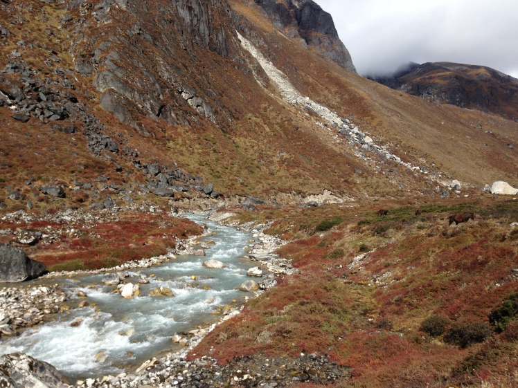 Colorful Flora, Icy Streams, Giant Mountains: Goechala Trek - don't miss the wild horses grazing