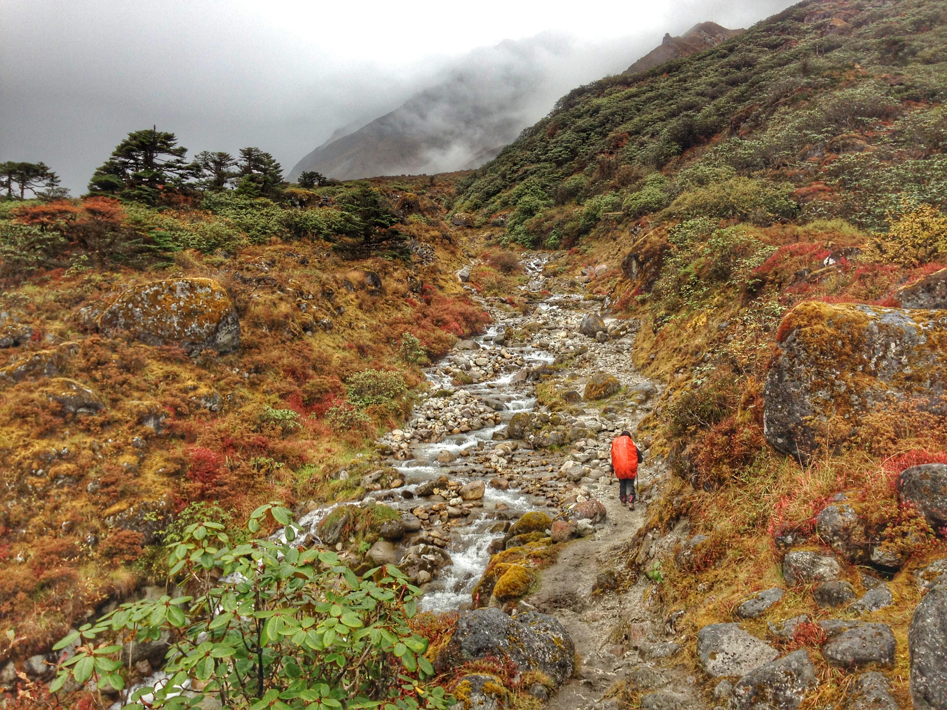 colourful wild flora of Kanchenjunga  National Park