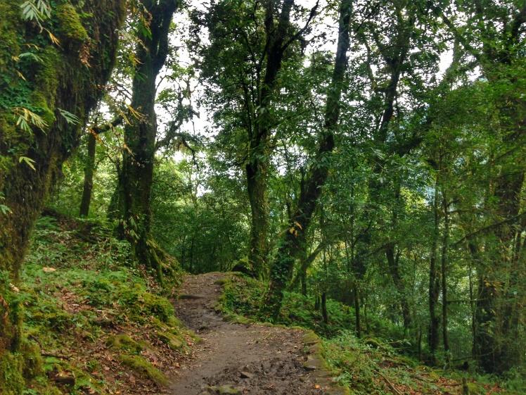 Inside Kanchenjunga National Park: Goechala Trek
