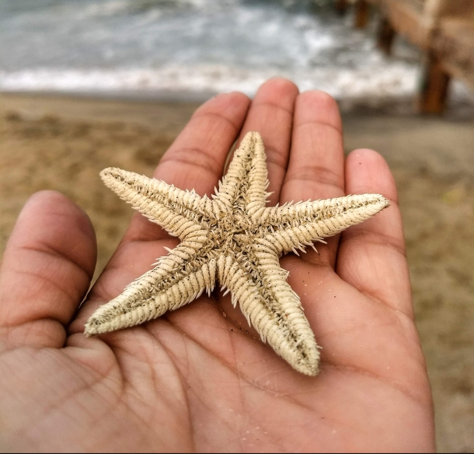 treasures of the seas at puducherry