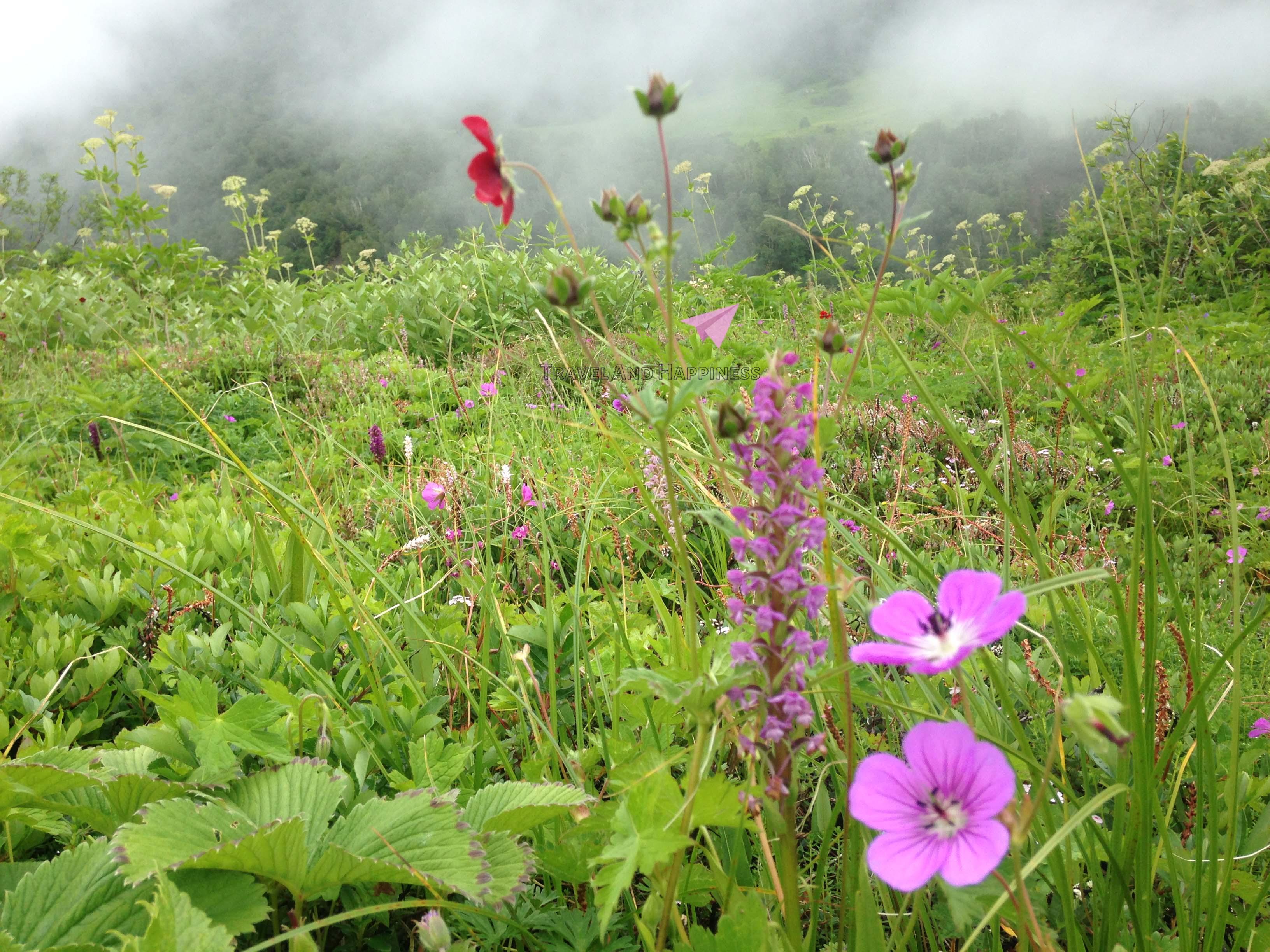 8.-himalayan-wildflowers-